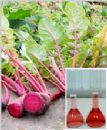 Radish Red Color